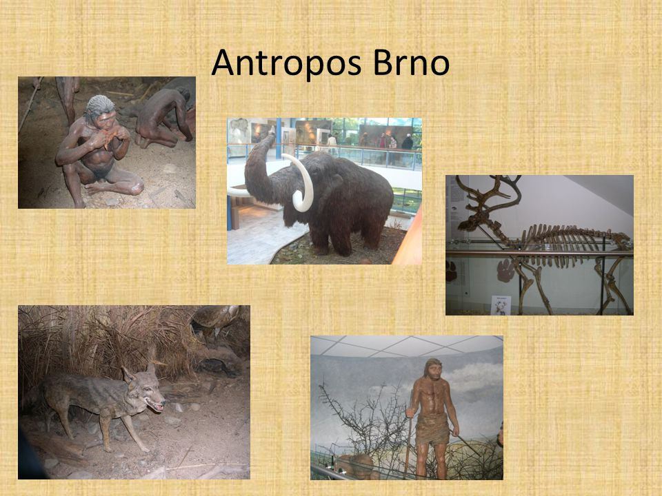Antropos Brno