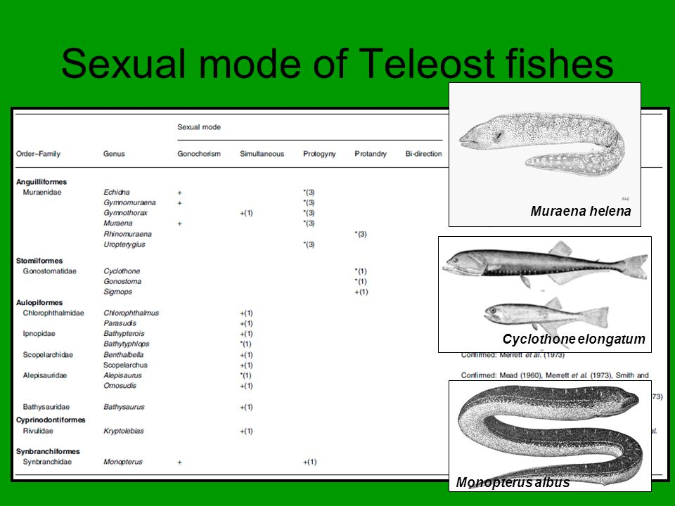 Sexual mode of Teleost fishes