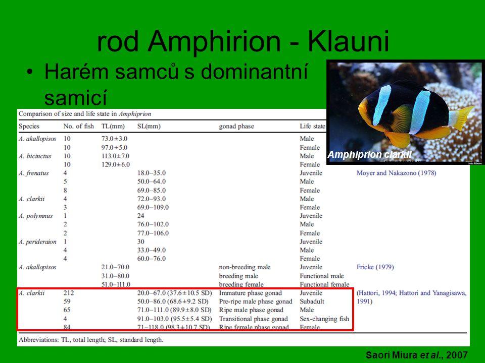 rod Amphirion - Klauni Harém samců s dominantní samicí