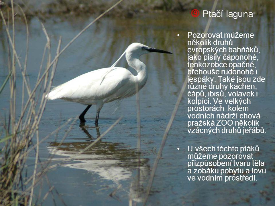  Ptačí laguna