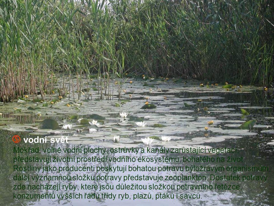  vodní svět Mokřad, volné vodní plochy, ostrůvky a kanály zarůstající vegetací, představují životní prostředí vodního ekosystému, bohatého na život.
