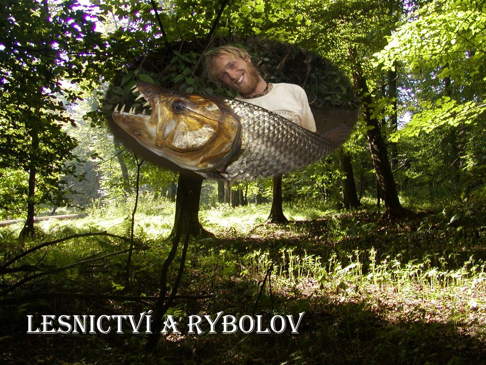 Lesnictví a rybolov