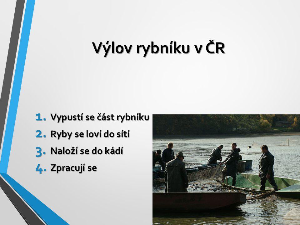Výlov rybníku v ČR Vypustí se část rybníku Ryby se loví do sítí