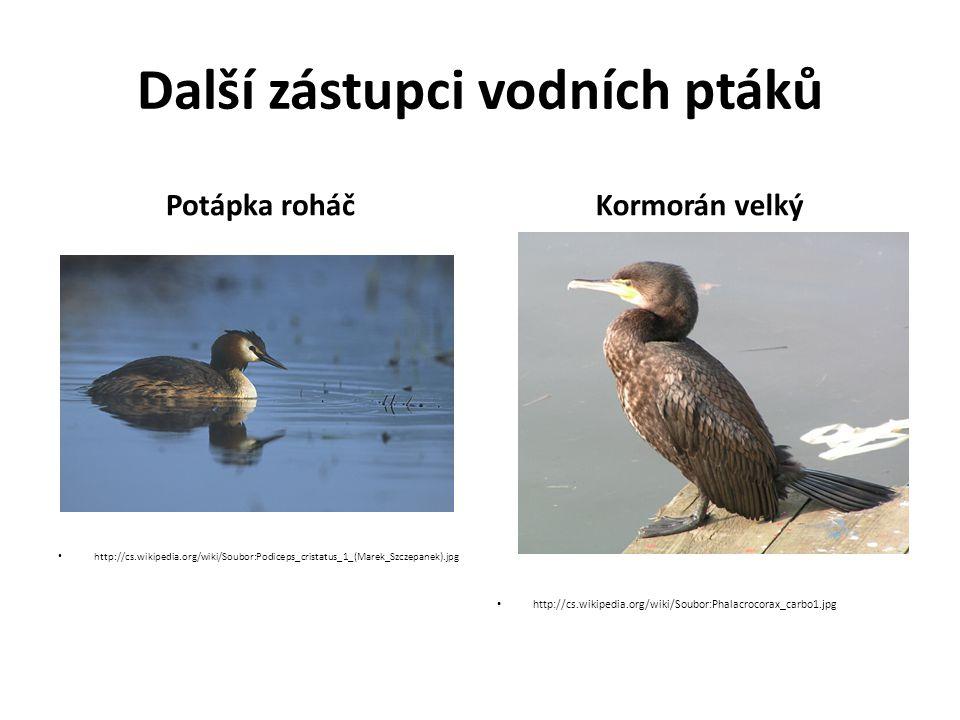 Další zástupci vodních ptáků