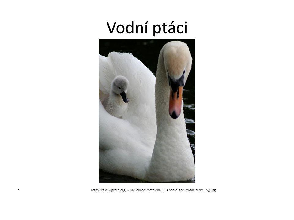 Vodní ptáci http://cs.wikipedia.org/wiki/Soubor:Photojenni_-_Aboard_the_swan_ferry_(by).jpg