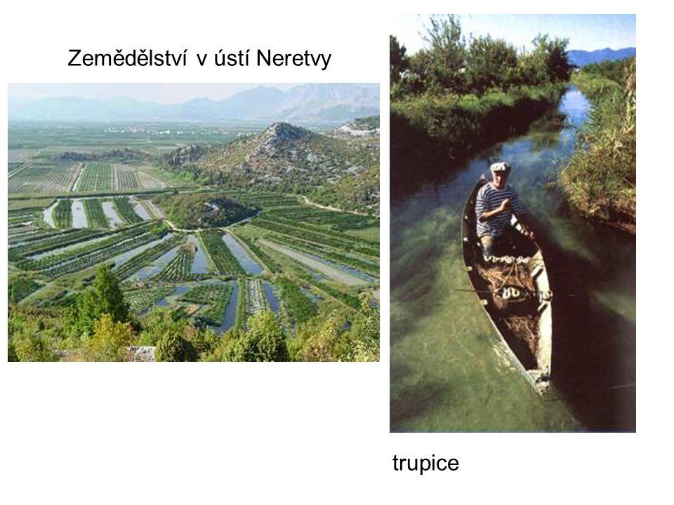 Zemědělství v ústí Neretvy