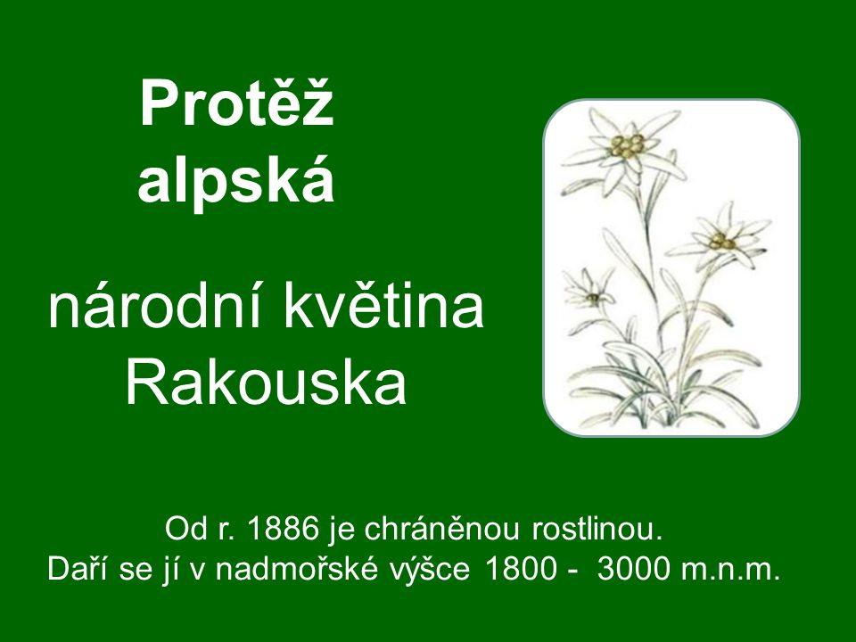 národní květina Rakouska