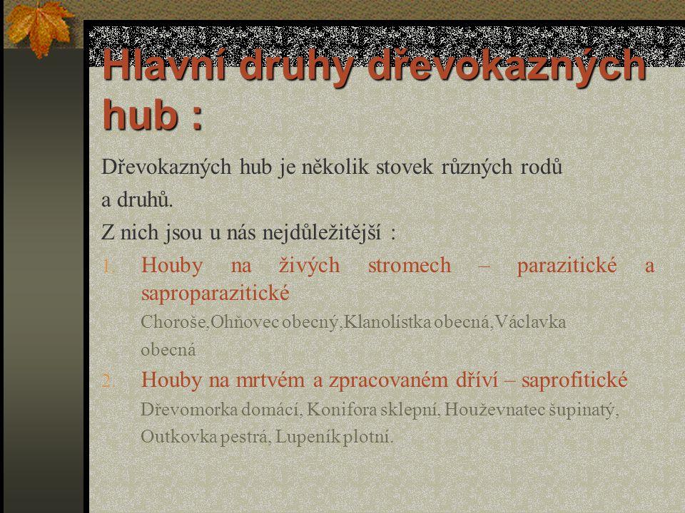 Hlavní druhy dřevokazných hub :