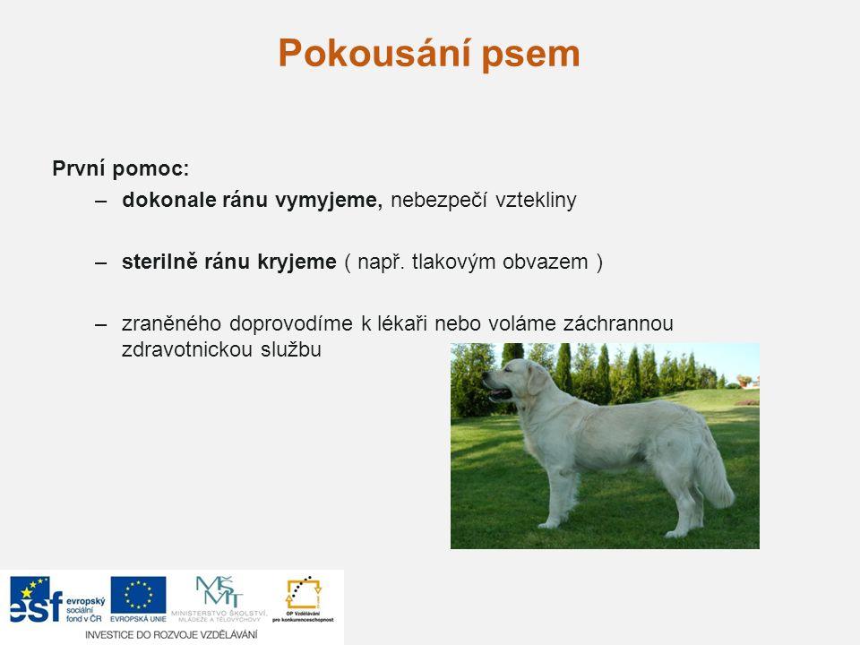 Pokousání psem První pomoc: