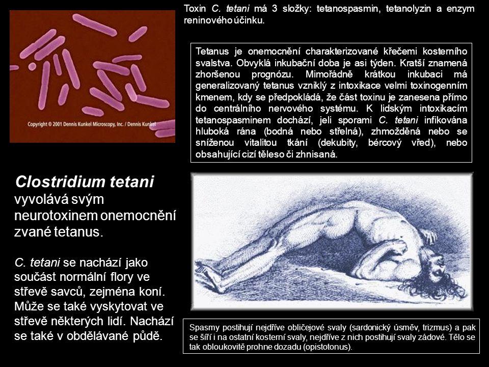 Toxin C. tetani má 3 složky: tetanospasmin, tetanolyzin a enzym reninového účinku.