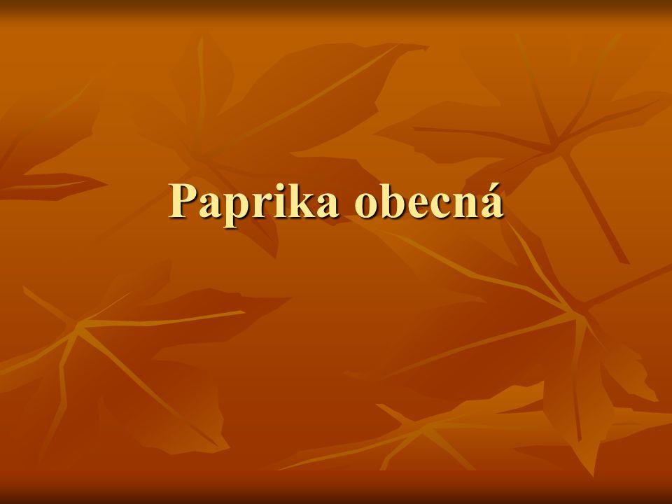 Paprika obecná