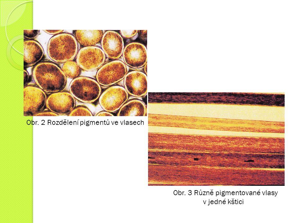 Obr. 2 Rozdělení pigmentů ve vlasech
