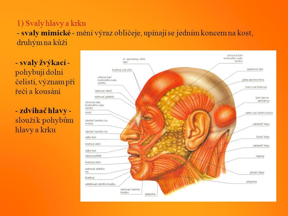 1) Svaly hlavy a krku - svaly mimické - mění výraz obličeje, upínají se jedním koncem na kost, druhým na kůži.