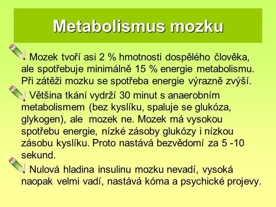 Metabolismus mozku