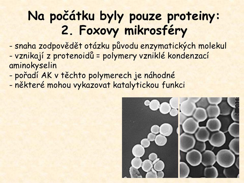 Na počátku byly pouze proteiny: