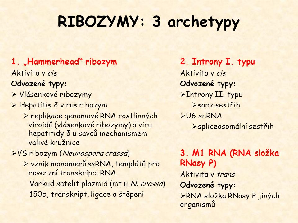 "RIBOZYMY: 3 archetypy 1. ""Hammerhead ribozym 2. Introny I. typu"