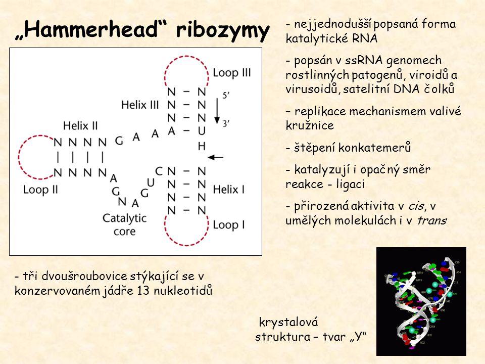 """""""Hammerhead ribozymy"""