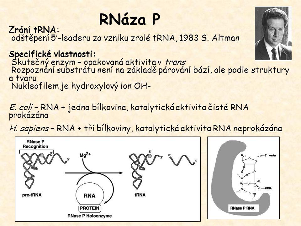 RNáza P Zrání tRNA: odštěpení 5'-leaderu za vzniku zralé tRNA, 1983 S. Altman. Specifické vlastnosti: