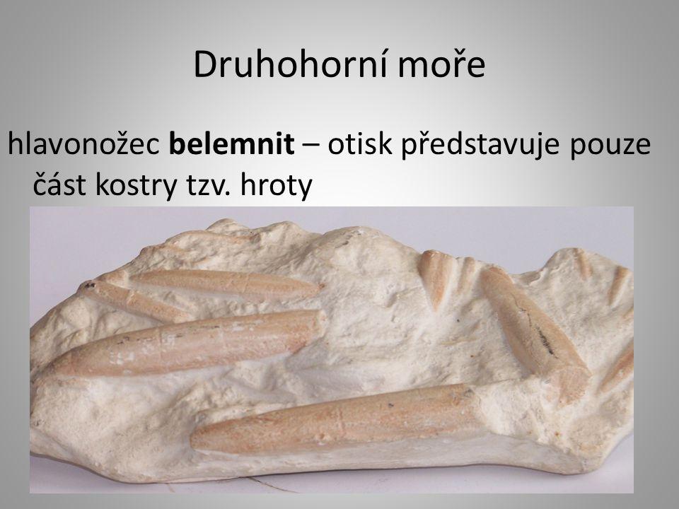 Druhohorní moře hlavonožec belemnit – otisk představuje pouze část kostry tzv. hroty