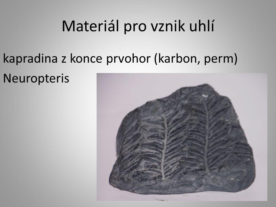 Materiál pro vznik uhlí