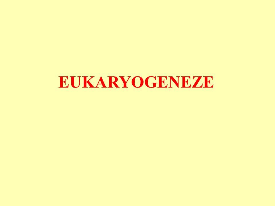 eukaryogeneze