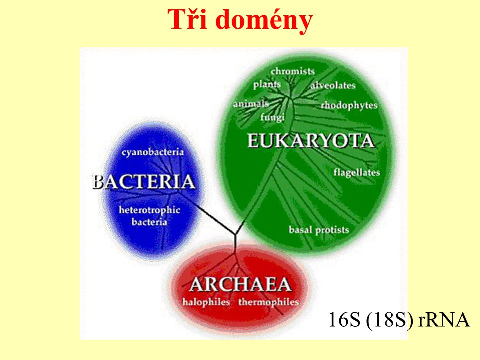 Tři domény 16S (18S) rRNA