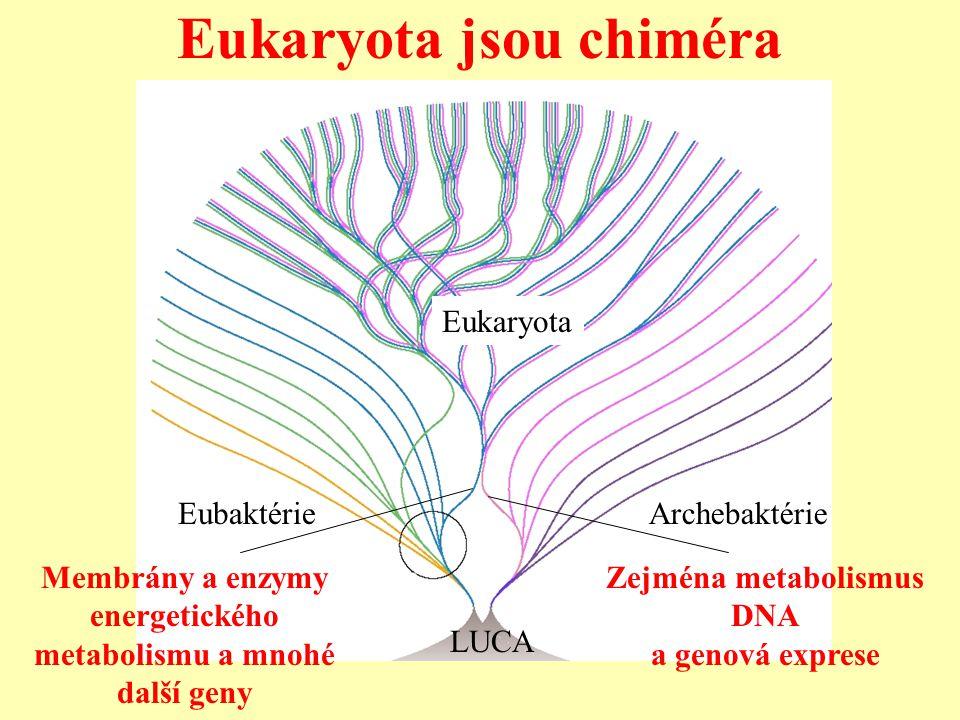 Eukaryota jsou chiméra