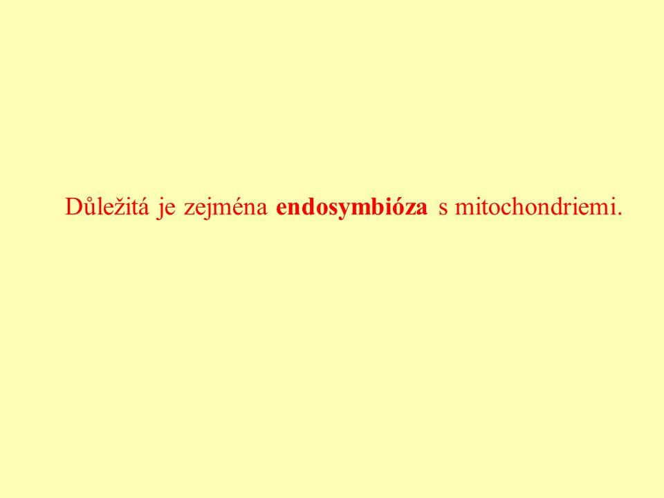 Důležitá je zejména endosymbióza s mitochondriemi.