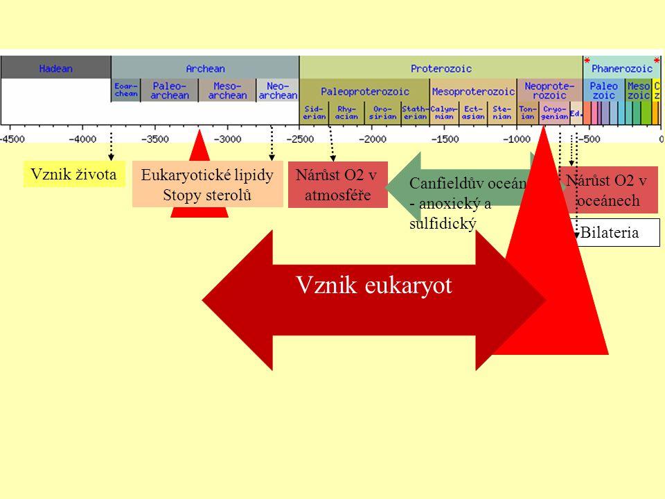 Vznik eukaryot Canfieldův oceán - anoxický a sulfidický Vznik života