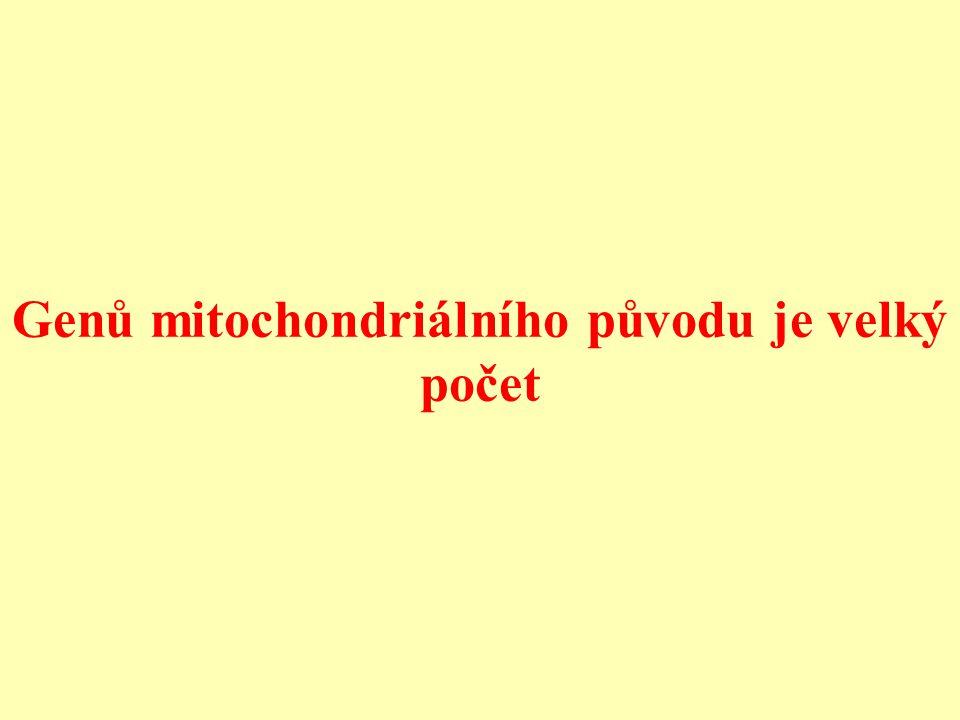 Genů mitochondriálního původu je velký počet