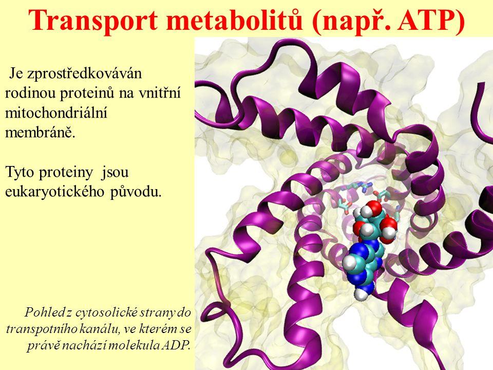 Transport metabolitů (např. ATP)