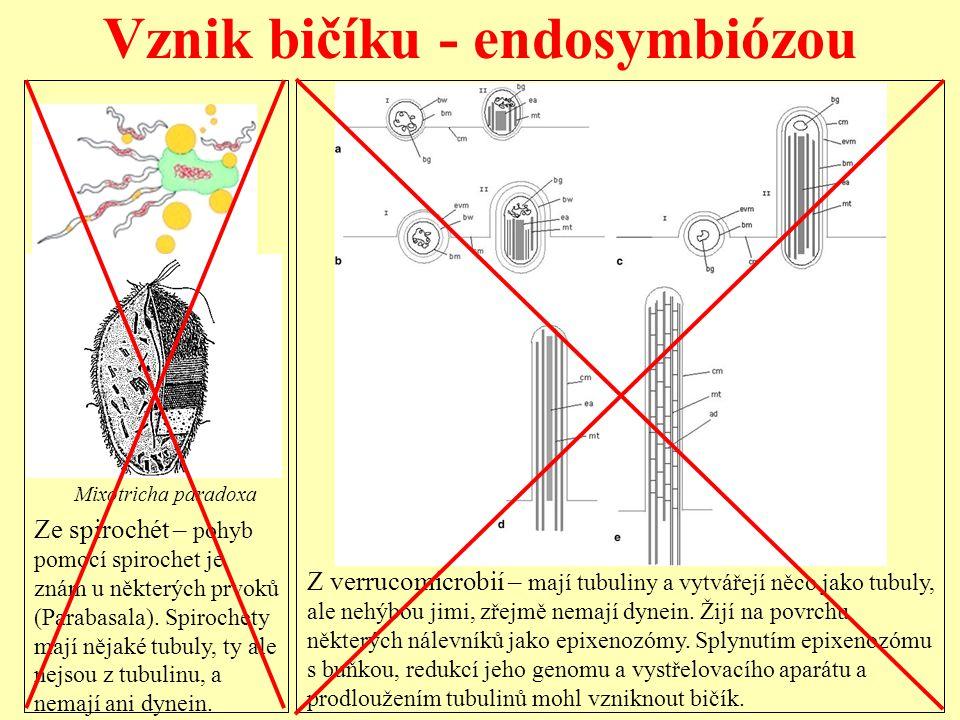 Vznik bičíku - endosymbiózou