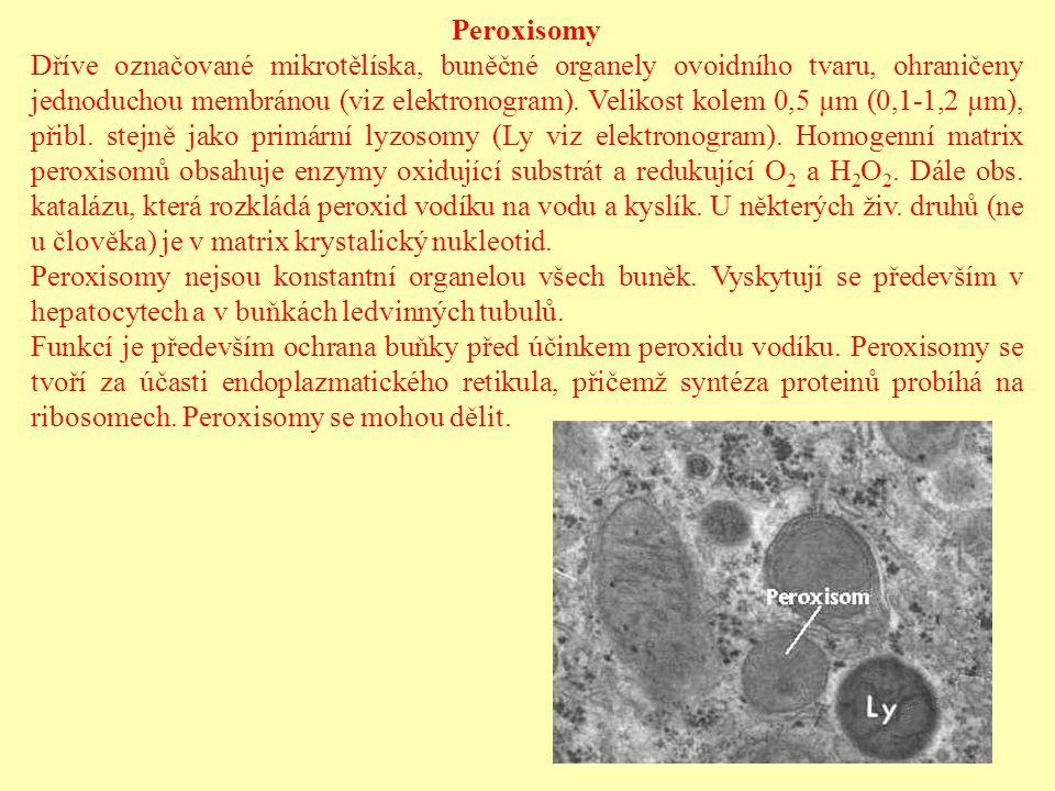 Peroxisomy