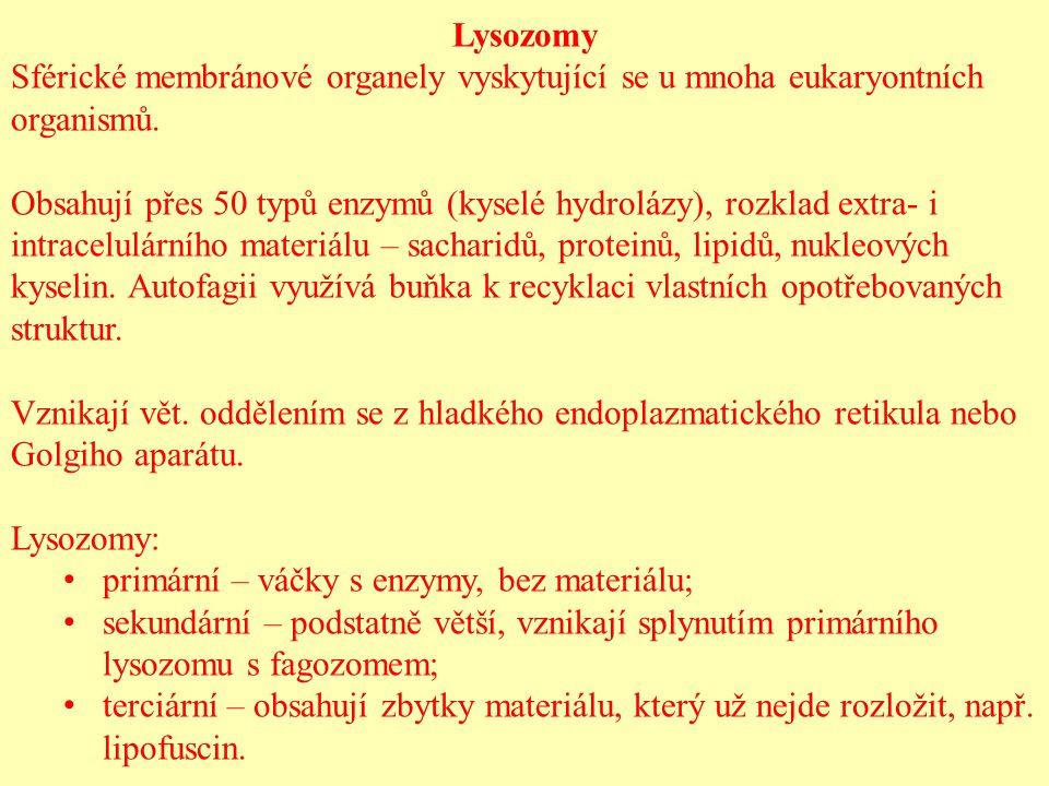 Lysozomy Sférické membránové organely vyskytující se u mnoha eukaryontních organismů.