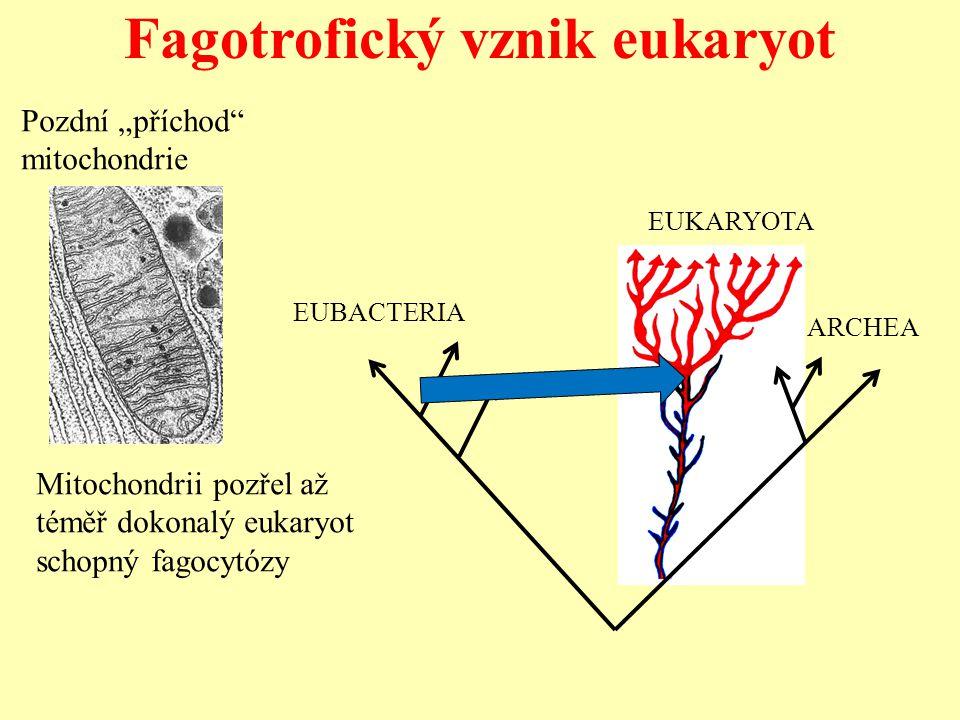 Fagotrofický vznik eukaryot