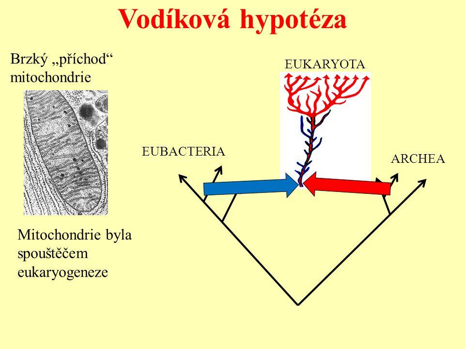 """Vodíková hypotéza Brzký """"příchod mitochondrie"""
