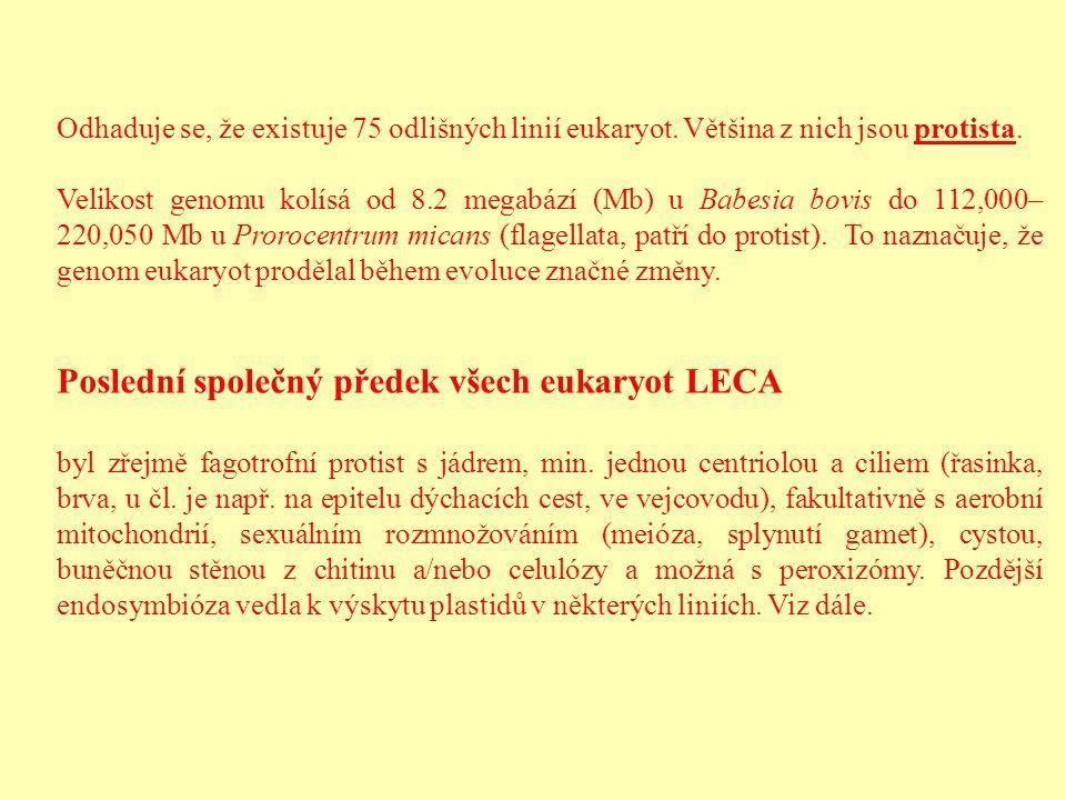Poslední společný předek všech eukaryot LECA