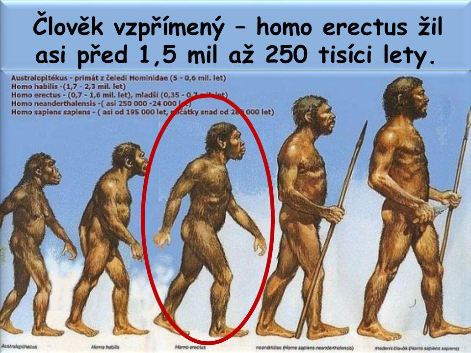 Člověk vzpřímený – homo erectus žil