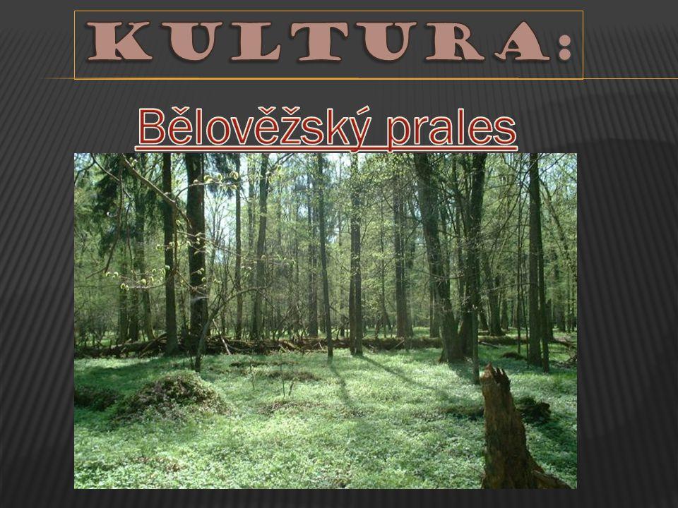 Kultura: Bělověžský prales