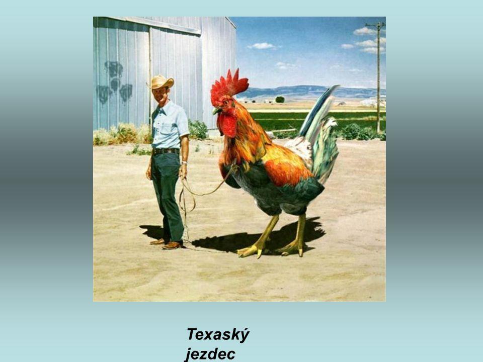 Texaský jezdec