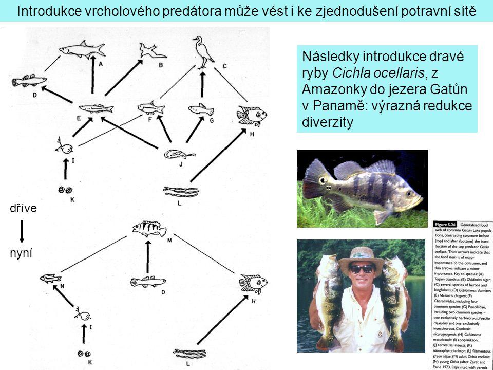 Introdukce vrcholového predátora může vést i ke zjednodušení potravní sítě