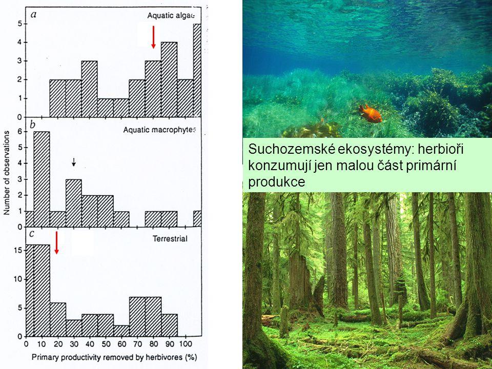 Suchozemské ekosystémy: herbioři konzumují jen malou část primární produkce