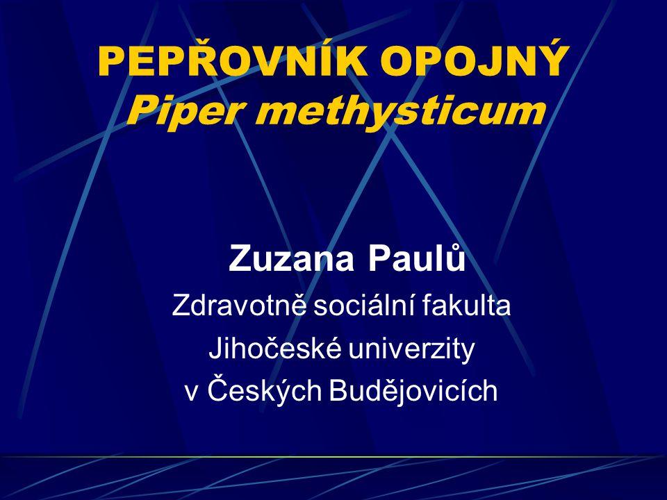 PEPŘOVNÍK OPOJNÝ Piper methysticum