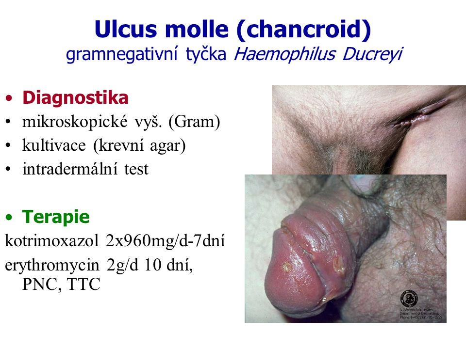 Ulcus molle (chancroid) gramnegativní tyčka Haemophilus Ducreyi