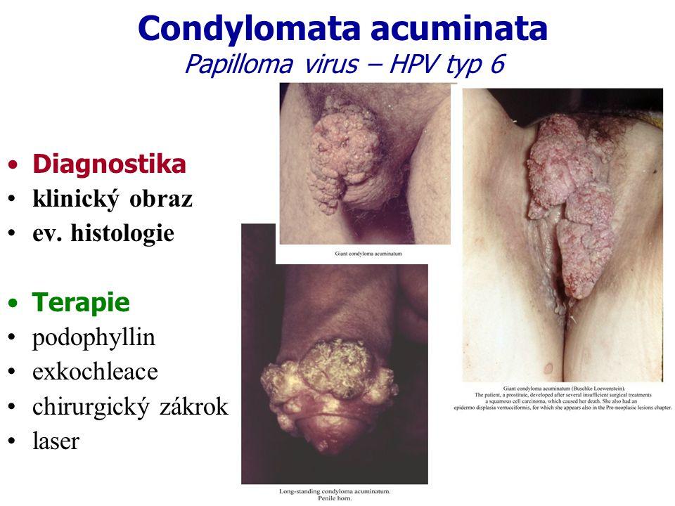 Condylomata acuminata Papilloma virus – HPV typ 6
