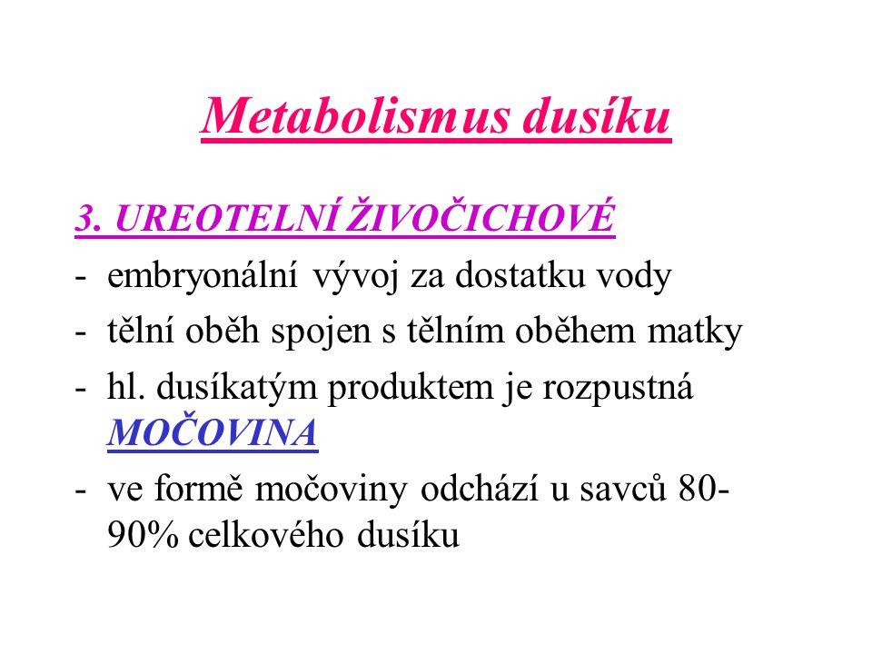 Metabolismus dusíku 3. UREOTELNÍ ŽIVOČICHOVÉ