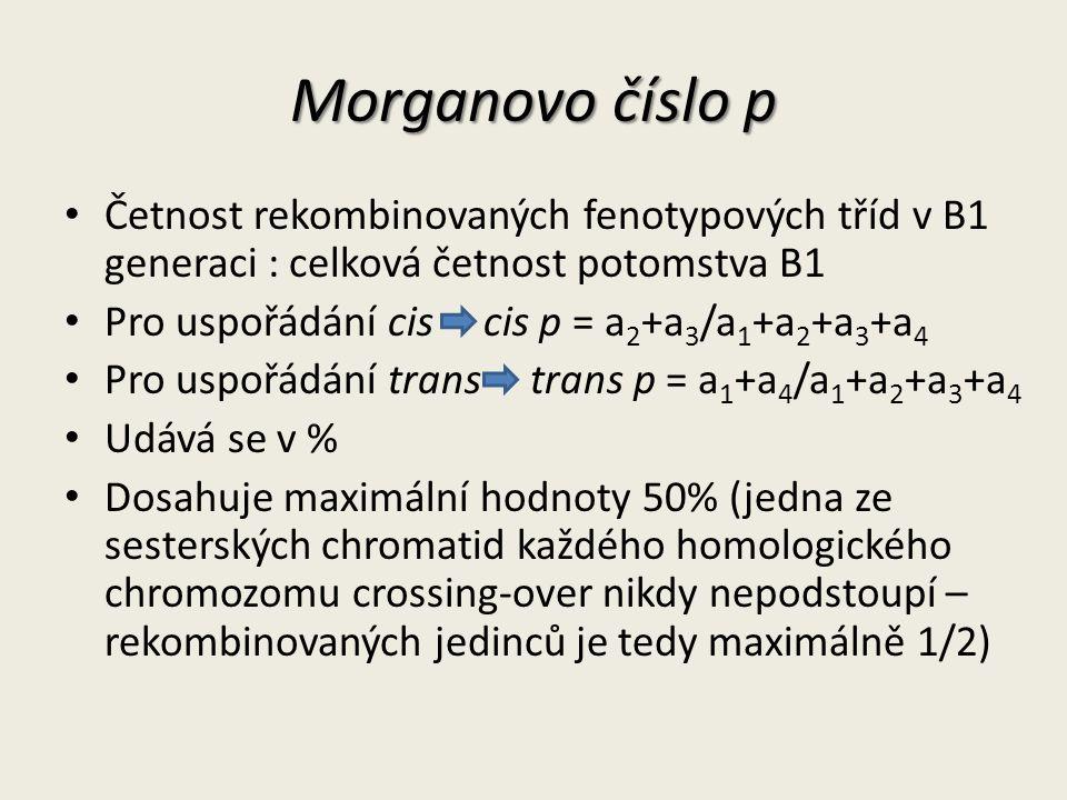 Morganovo číslo p Četnost rekombinovaných fenotypových tříd v B1 generaci : celková četnost potomstva B1.