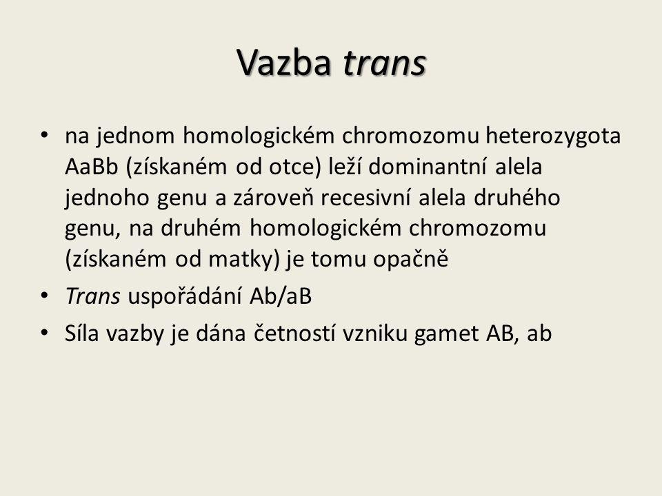Vazba trans