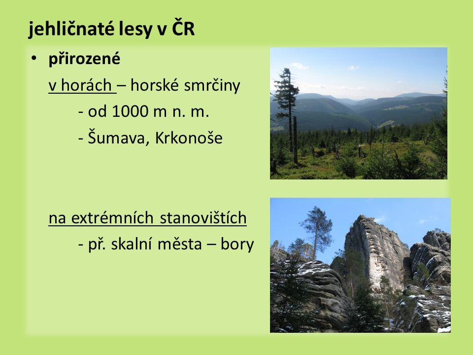 jehličnaté lesy v ČR přirozené v horách – horské smrčiny