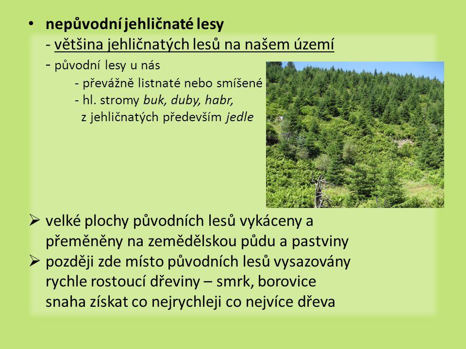 nepůvodní jehličnaté lesy - většina jehličnatých lesů na našem území